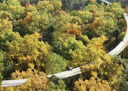 bovenaanzicht vogelvlucht fietsbelevenis in het bos, ontwerp cirkelvormig fietspad tussen boomtoppen