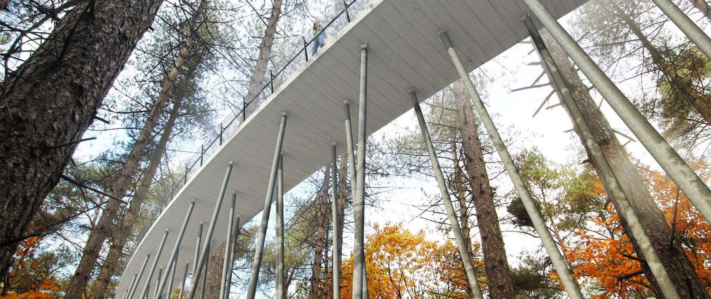 tender fietsbelevenis brug tussen boomtoppen, fietsbrug op stalen pilaren